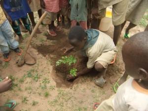 Klogbome planting