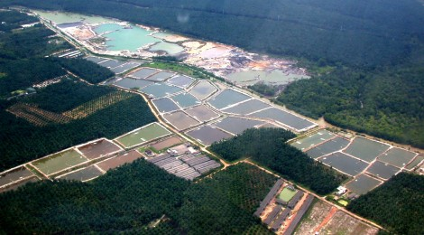 Shrimp-farm-aerial-original.jpg