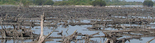 miles-of-mangrove-trees