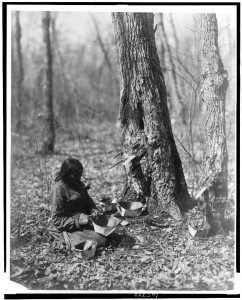 Ojibwe woman tapping for sugar maple syrup