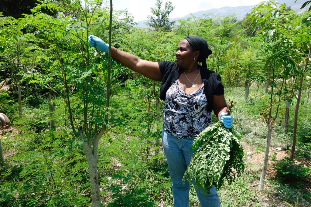 Moringa: The Superfood with a Social Mission