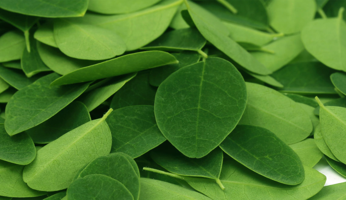 Where in the World is Moringa Oleifera?