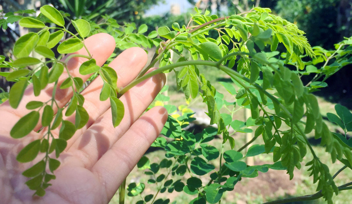 How Often Should I Eat Moringa