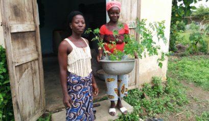 how to grow moringa