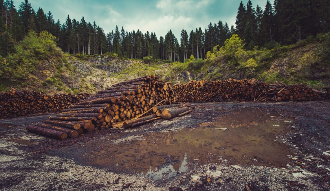 How Deforestation is Killing the Planet