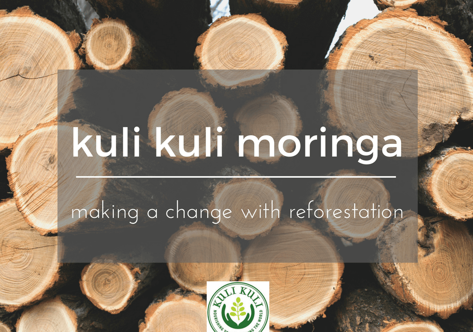 moringa reforestation project