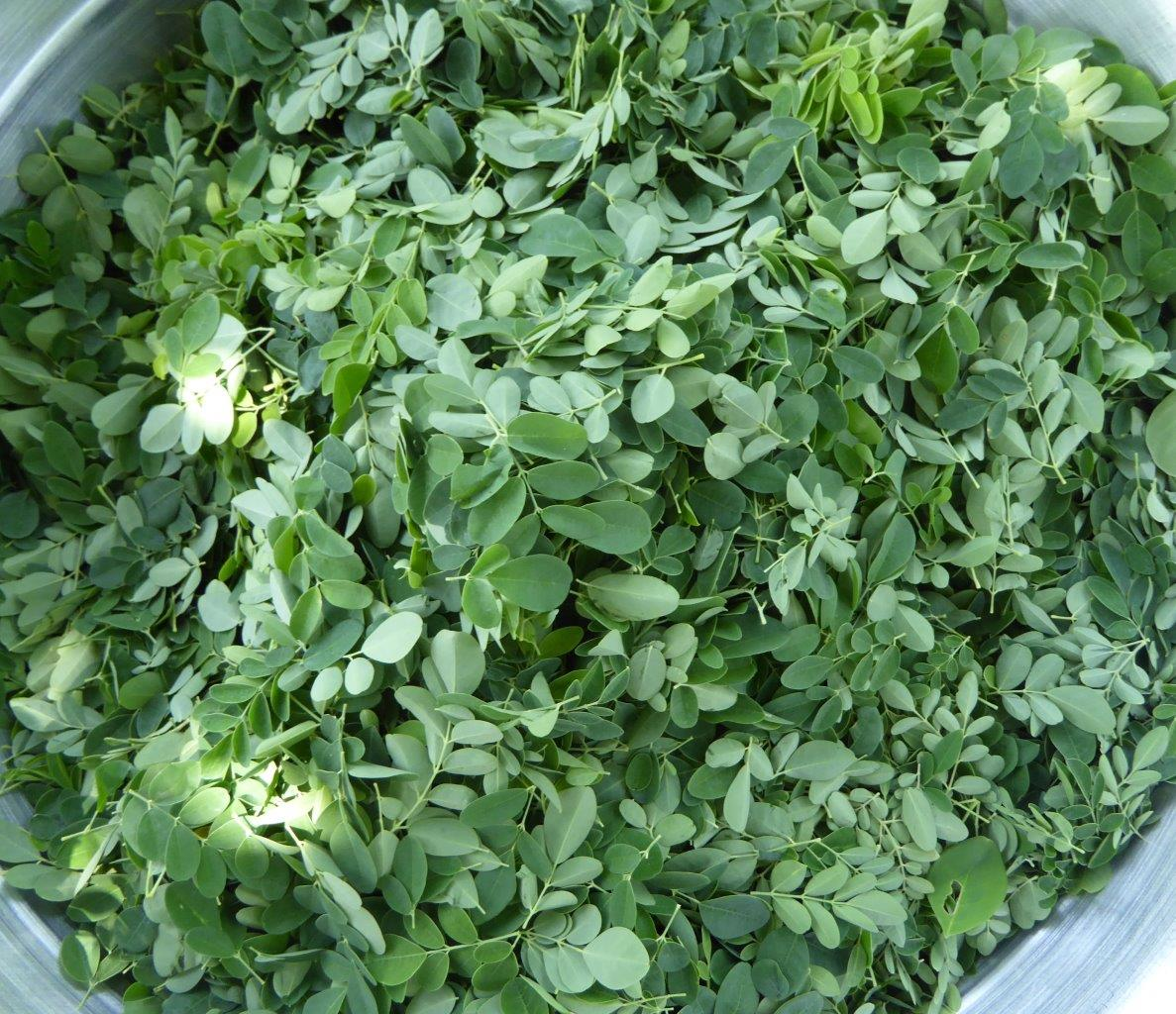 Moringa leaves for moringa sauce