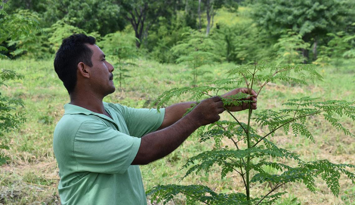 Shifting the Nicaraguan landscape with moringa farmers