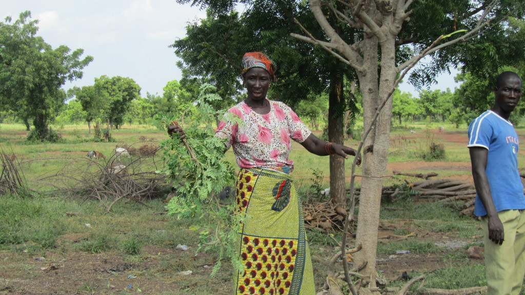 Grandma with moringa tree