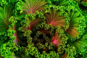 Leafy greens such as Moringa and Kale can fight Diabetes