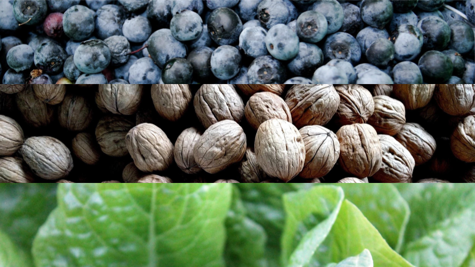 What are the Top Anti-Inflammatory Foods?