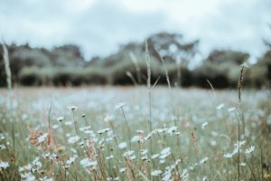 Meadow and Open Space