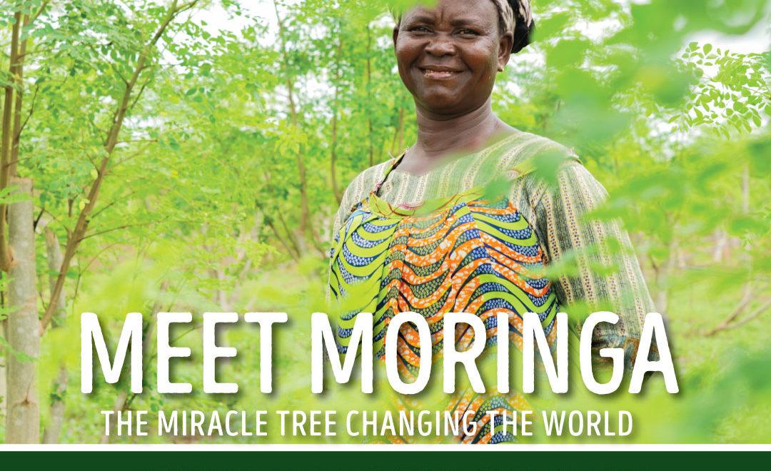 Meet Moringa: The Miracle Tree Changing the World