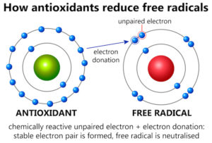 How free radicals work